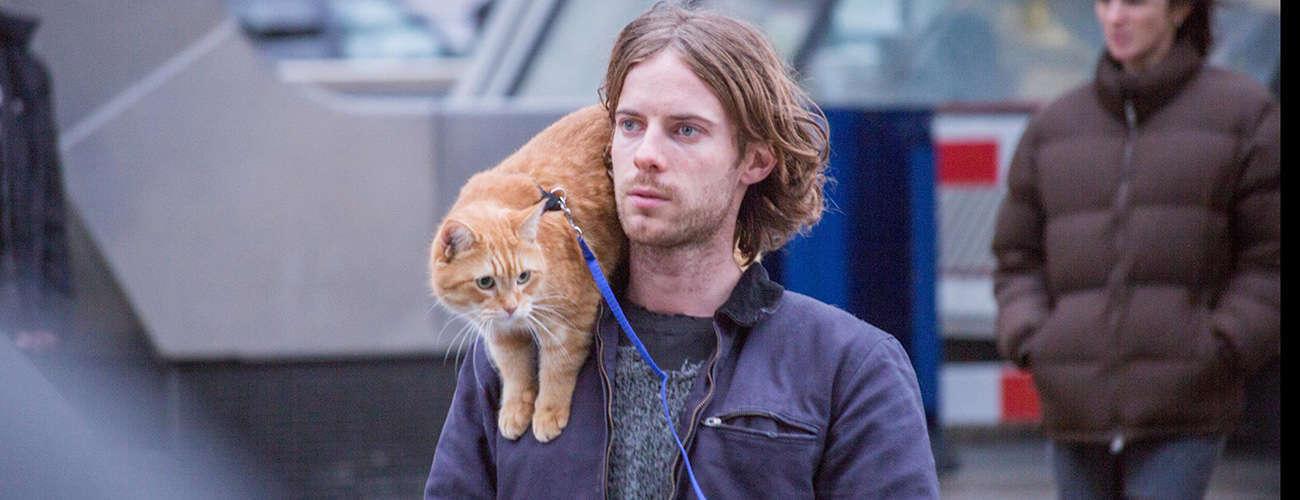 Unduh 99+  Gambar Kucing Sedih Hd Paling Keren Gratis